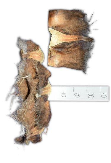 Palm schors