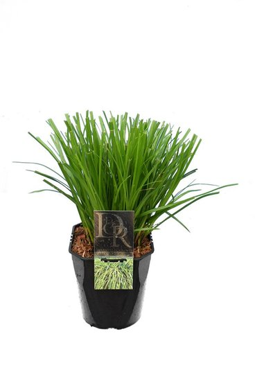 Carex Evergreen 5 ltr
