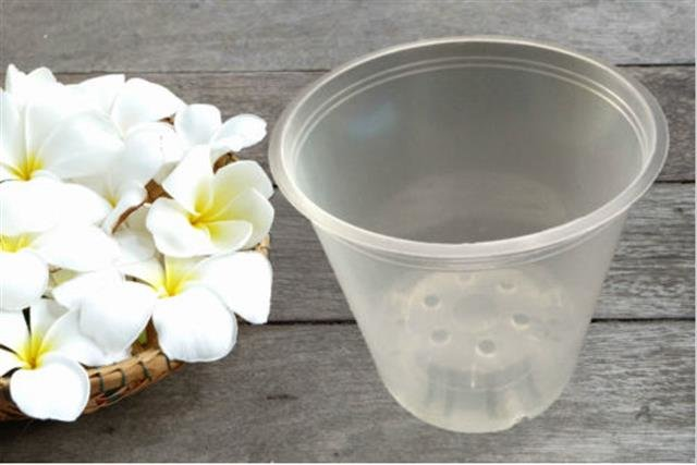 Orchideeen Pot doorzichtig